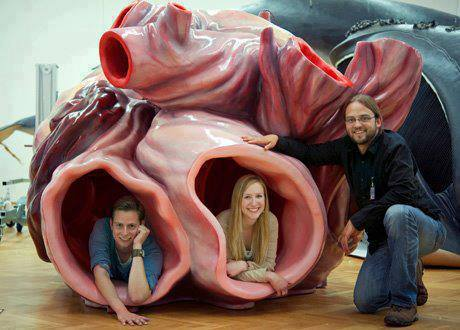 model of blue whale heart