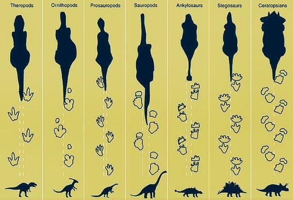 Dinosaur Identification Chart For Kids
