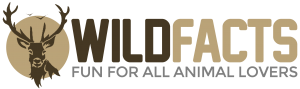 Wild-Facts-2.0-Logo-300x89.png