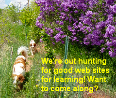 Dogs walking past lilacs in bloom, caragana blooming in background.