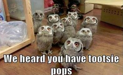 A bunch of baby owls